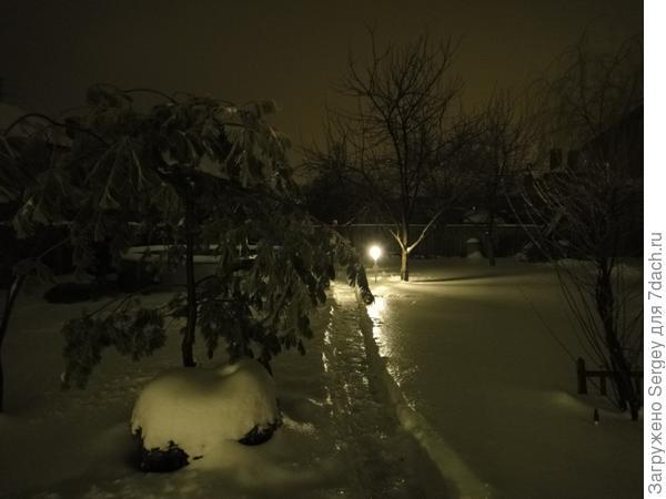 Зима...фонарь...сосна...тропинка....