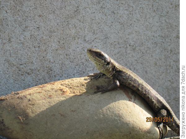 Мини охранник-дракон