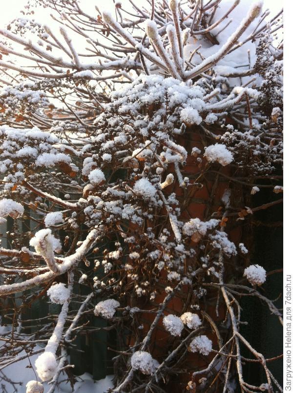 Зима в её красе.