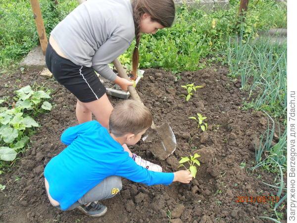Алина и Рустам огородничают.