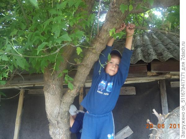 Мой средний сын на дереве