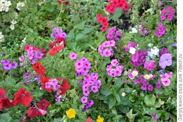 Любимые цветочки