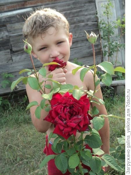 Осыпались розы
