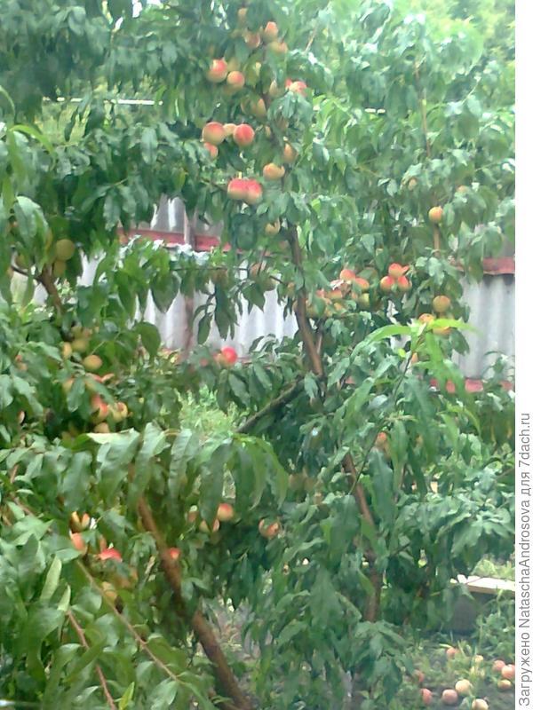 Персиковый рай.