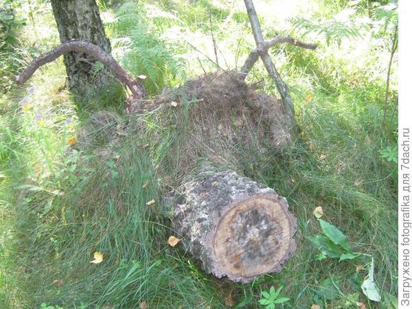 лесной кабан
