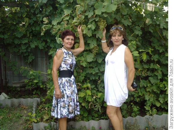 Наш урожай винограда