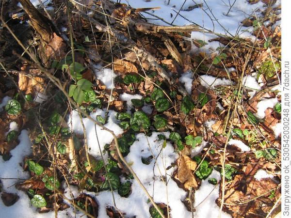 зима отступает перед натиском жизни