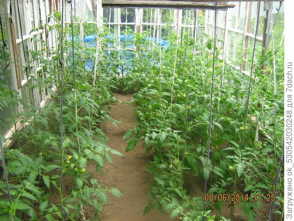 Растения через 1.5 месяца после высадки.