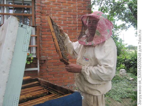 Осмотр рамки с пчелами.