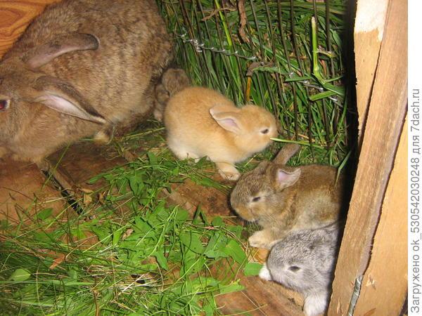 Крольчатам 20 дне