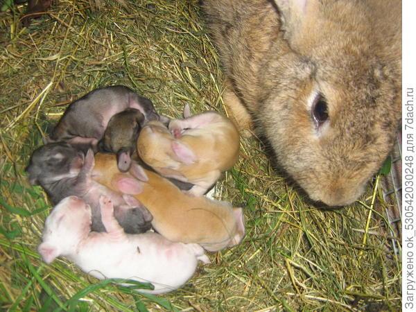 Крольчата, 6 дней.