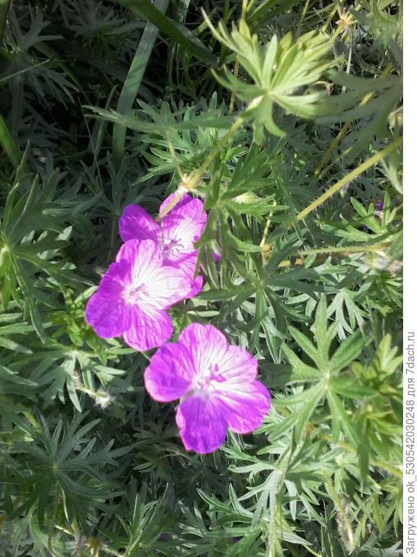 Вот ещё цветочки на дорожке.