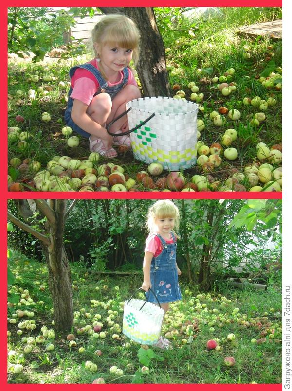 яблоки и Катя
