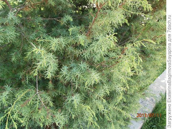 Второе растение. Что это?