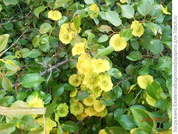 Фото первого растения.