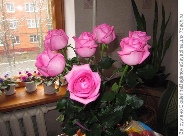 Эти розы мне подарил любимый просто так!
