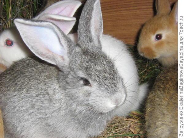 Наши кролики.