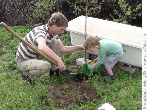 Каждый мужчина должен посадить дерево!