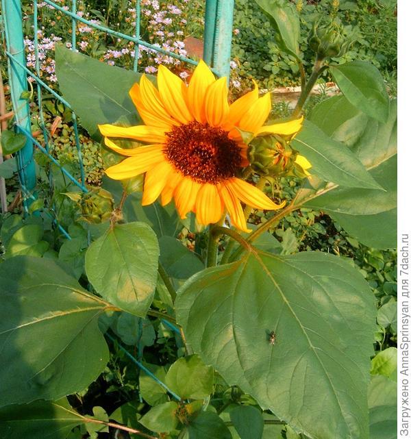 Во саду ли, в огороде...А вернее на приусадебном участке.