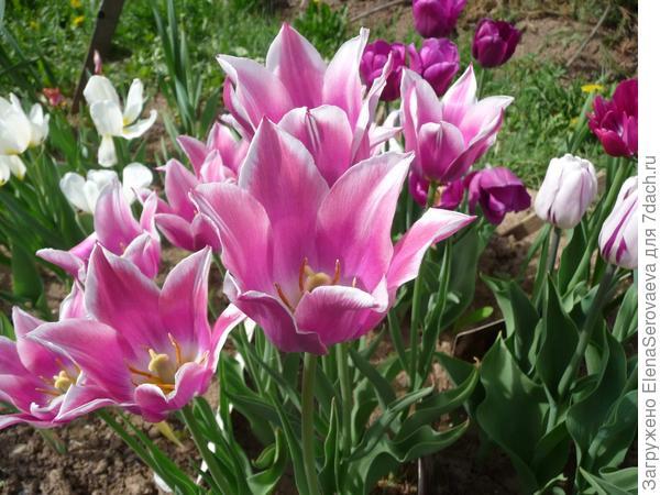 Цветы, где живут дюймовочки