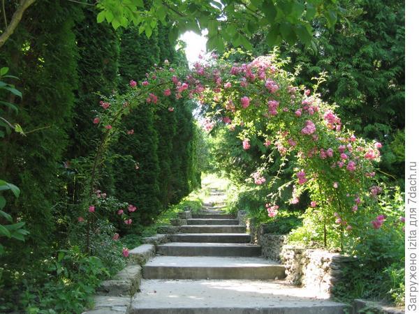 Радуга в саду