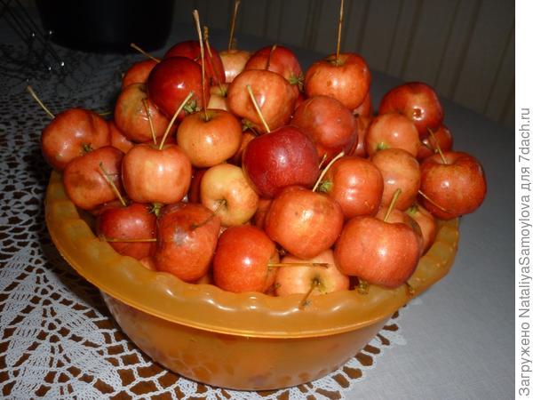 Наши яблочки - малышки.
