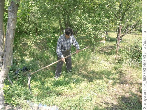 Целый день коса-литовка деда Семёна косила траву.