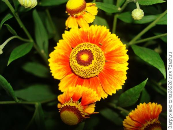 Еще один цветочек