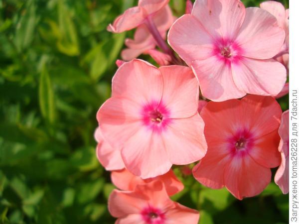 Мой самый любимый цветок