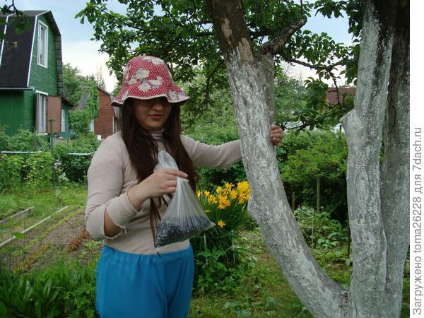 Самый первый урожай ягоды