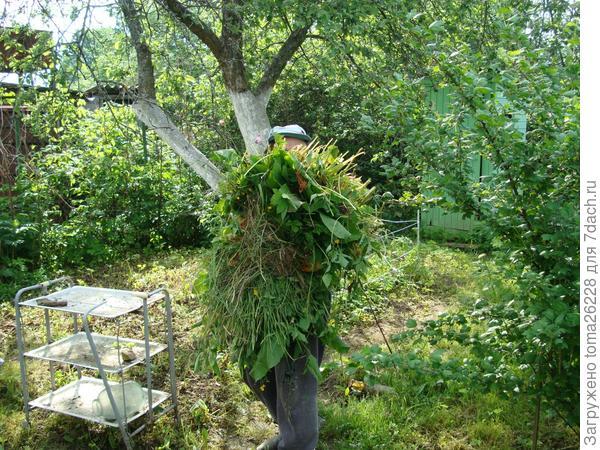 Охапка травы