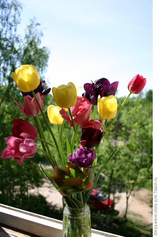 Дача - это когда на окошке букет из собственных цветов!