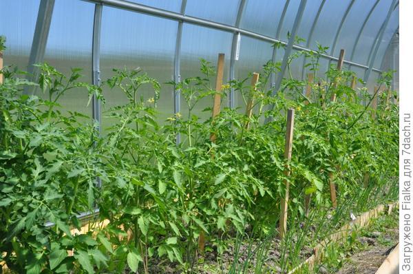 на глинистой почве можно получить отличный урожай!
