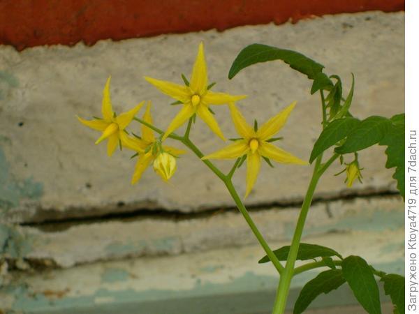 Огуречные цветочки!