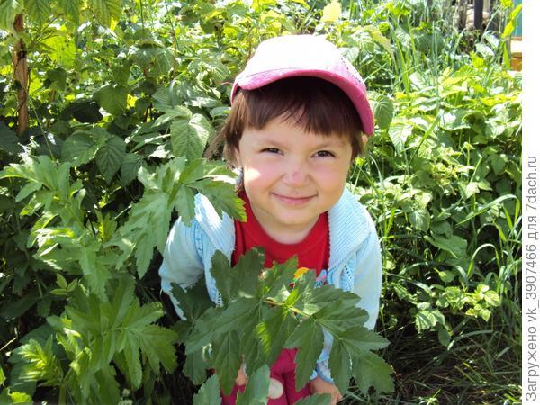Дочка просто обожает находиться на даче. Растения - это ее стихия. Она постоянно рассматривает листики, узнает о новых растениях, поливает их маленькой лейкой.
