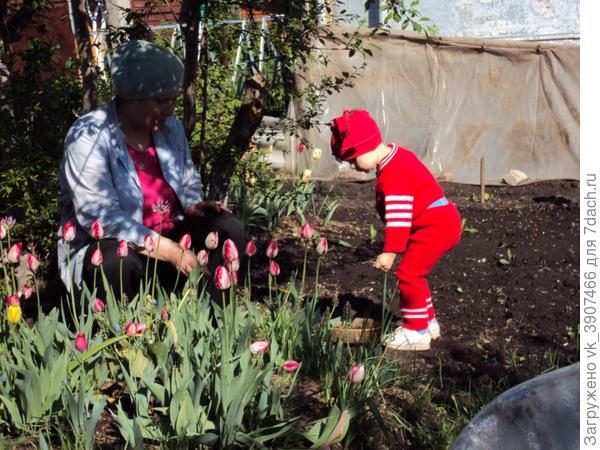 Настюша узнает, что есть такие замечательные цветы-тюльпаны!