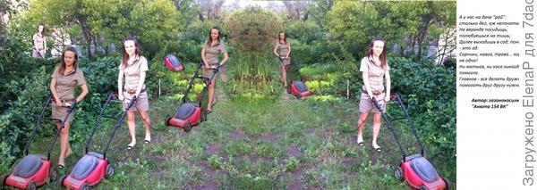 Трудовые будни газонокосилки