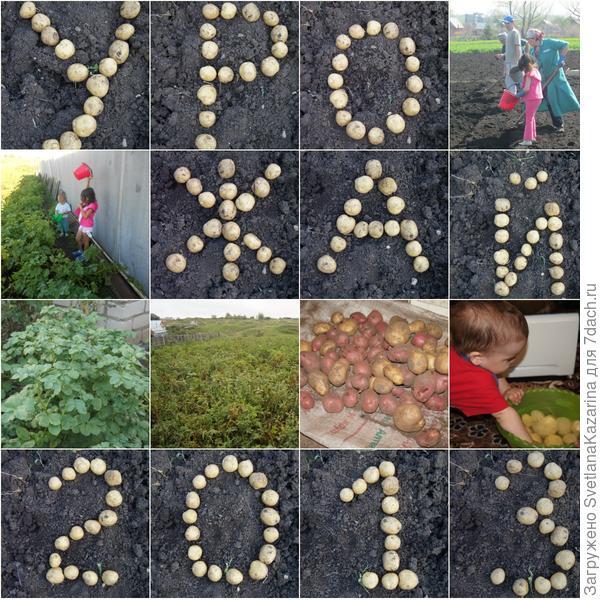 Урожай-2013 удался!