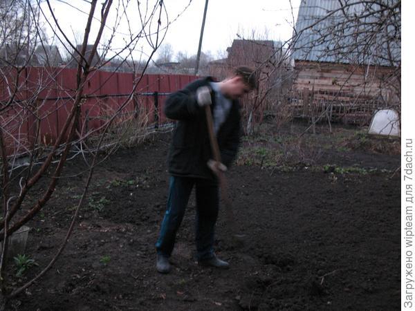 Культиватору лопата не помеха!