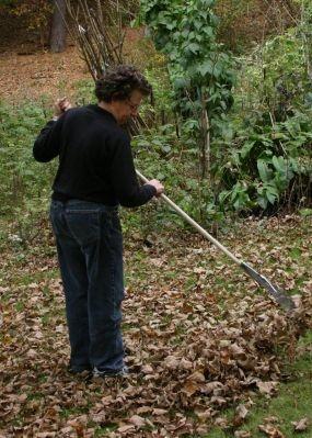 Собираем листву!