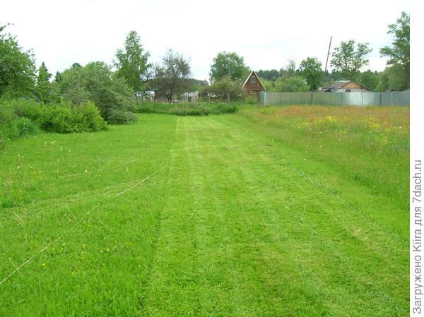 Недельный газон, свежескошенный и ни разу не кошенный