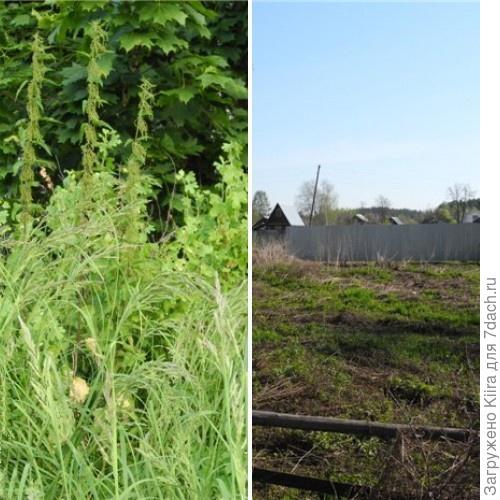 До (трава по пояс) и после (грабельками поработали уже) Дерево осталось слева.