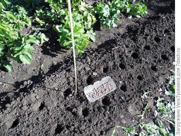 Вот так плоскорезом обработана почва на грядке. Видно, что боковины грядки не повреждены.