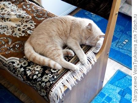 Наш кот Айка.