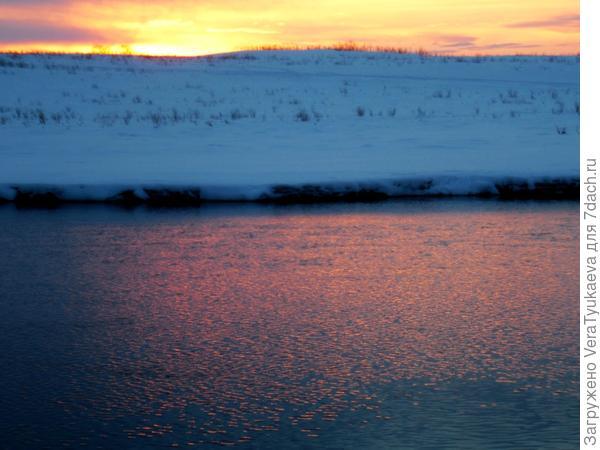 Лебеди на Алтае. Зима 2014 - 2015