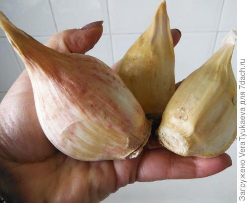 Фото с сайта http://www.seedparade.co.uk/forum/vegetable-plot/elephant-garlic-659.html