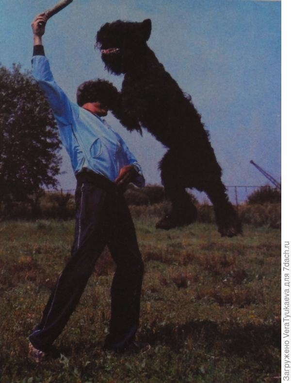 """Фото из книги Корнеева """"Слово о собаке"""". Это черныш так прыгать умеет."""