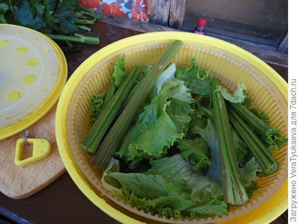 Черешки сельдерея и листья салата.