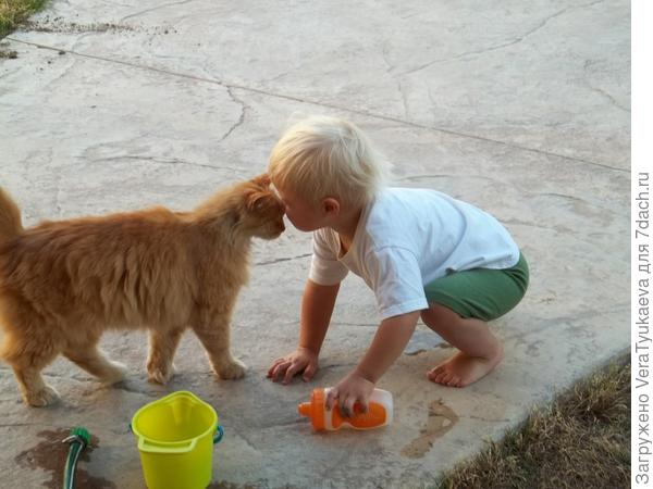 Кот и малыш.