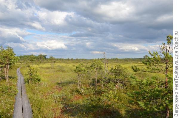 Низинный участок земли с близкими грунтовыми водами.